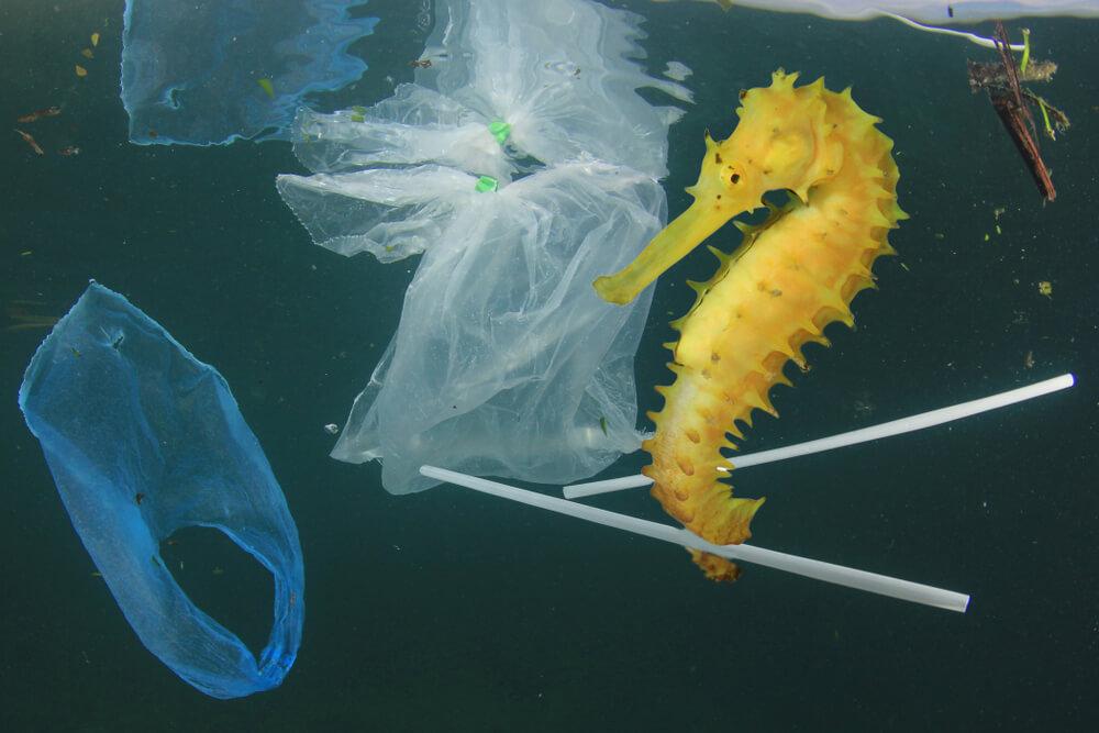 The Economics Of Plastic-Free Living
